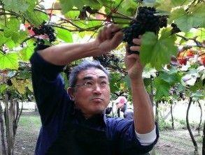 Taiwanesischer Wein gewinnt Goldmedaille in Paris