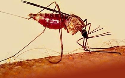 Tödliche Gefahr: Wie schütze ich mich gegen Malaria ?