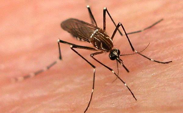 Malaysia: Zahl der Dengue-Fälle verdreifacht